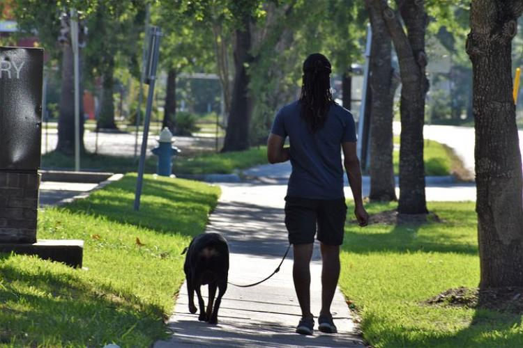 Pet Sitter Duties & Responsibilities